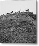 Horizon Horse Metal Print