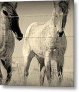 Horse Mysteries.. Metal Print