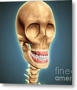 Human Skeleton Showing Teeth And Gums Metal Print by Stocktrek Images