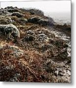 Iceland Barren Landscape Metal Print by Francesco Emanuele Carucci