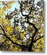 Illuminated Oak Tree Metal Print