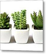 Indoor Plants Metal Print by Boon Mee
