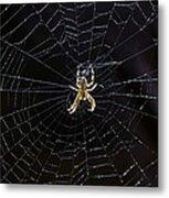 Itsy Bitsy Spider My Ass 2 Metal Print by Steve Harrington