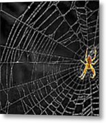 Itsy Bitsy Spider My Ass 3 Metal Print by Steve Harrington
