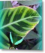 Jade Butterfly With Vignette Metal Print