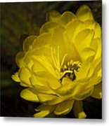 Just Call Me Mellow Yellow  Metal Print
