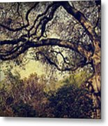 Just How It Ought To Be Metal Print by Laurie Search