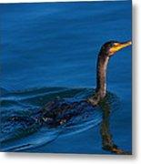 Juvenile Cormorant Swim Metal Print