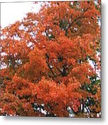 Lady Autumn - Tree Metal Print by Margaret McDermott