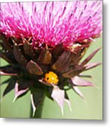 Ladybug And Thistle Metal Print