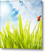 Ladybug Metal Print by Boon Mee