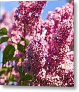 Lilacs Metal Print by Elena Elisseeva