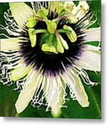 Lilikoi Flower Metal Print by James Temple