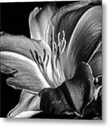 Lily In Black In White Metal Print by Camille Lopez