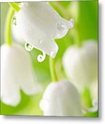 Lily Of The Valley Metal Print by Boon Mee