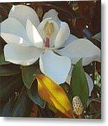 Longue Vue Magnolia Metal Print by Katie Spicuzza