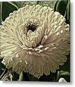 Looking Back Metal Print by Wendy J St Christopher
