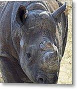 Lurching Rhino Metal Print