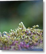 Magical Moss Metal Print by Sarah Crites