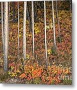 Majestic Autumn In The Grand Tetons Metal Print