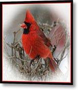 Male Northern Cardinal Metal Print by John Kunze