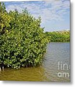 Mangrove Fores Metal Print by Carol Ailles