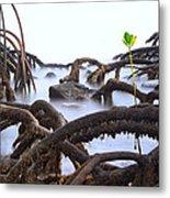 Mangrove Tree Roots Detail Metal Print by Dirk Ercken