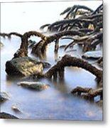 Mangrove Tree Roots Metal Print by Dirk Ercken