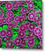 Many Blooms Metal Print by Michael Sokalski