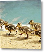 March Of The Ducklings Metal Print