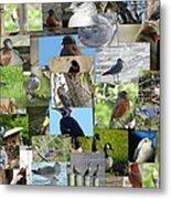 Maryland Birds Metal Print by Tom Ernst