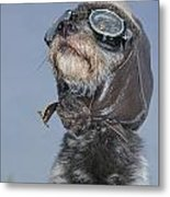 Mixed Breed Dog Dressed In Leather Cap Metal Print by Darwin Wiggett
