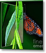 Monarch Butterfly 04 Metal Print