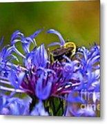 Mountain Cornflower And Bumble Bee Metal Print by Byron Varvarigos