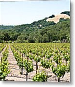 Napa Vineyard With Hills Metal Print