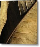 Natural Seduction Metal Print