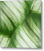 Nature Leaves Abstract In Green 2 Metal Print