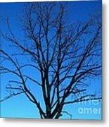 Nature Tree Metal Print
