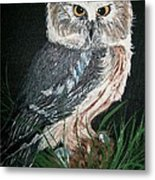 Northern Saw-whet Owl Metal Print by Sharon Duguay