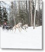 On The Race Trail Metal Print by Tim Grams