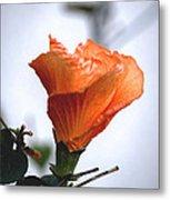 Orange Hibiscus Lax 2 Metal Print