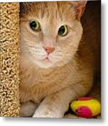 Orange Tabby Cat In Cat Condo Metal Print by Amy Cicconi