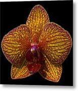 Orchid 16 Metal Print