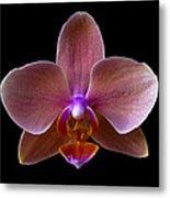Orchid 17 Metal Print