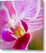 Orchide Detail 2 Metal Print by Kim Lagerhem