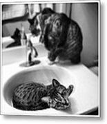 Oskar And Klaus At The Sink Metal Print by Mick Szydlowski