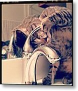 Oskar At The Faucet Metal Print by Mick Szydlowski