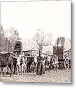 Ox-driven Wagon Freight Train C. 1887 Metal Print by Daniel Hagerman