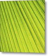 Palm Tree Leaf Abstract Metal Print
