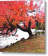 Panorama Of Red Maple Tree, Muskoka Metal Print by Henry Lin